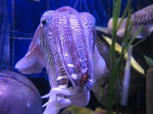 Gasterópodos y gasterópodas: observa su inteligente mirada y coméntala con tus compañeros.